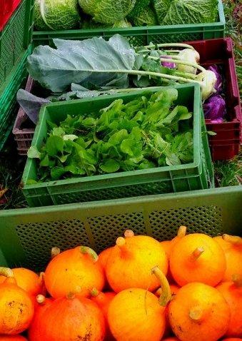 Gemüse frisch und fair vom Acker auf Ihren Teller!