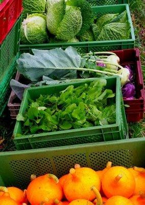 Obst, Gemüse, Blüten – alles ohne Tüten