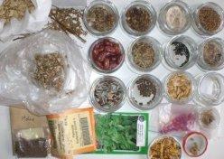 Saat und Pflanzentsuch